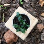 набор для выращивания растений на подоконнике купить